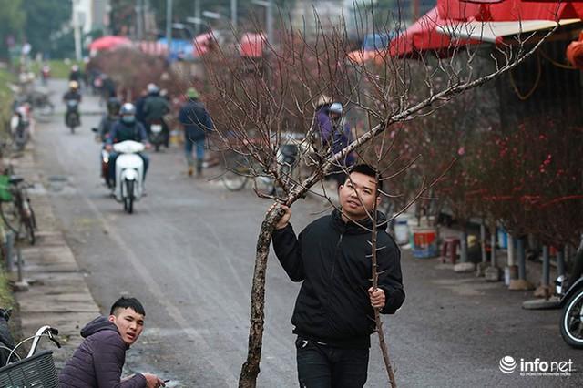 Thời tiết thuận lợi, đào Nhật Tân trổ bông to, đổ về phố phường Hà Nội - Ảnh 3.