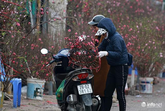 Thời tiết thuận lợi, đào Nhật Tân trổ bông to, đổ về phố phường Hà Nội - Ảnh 7.