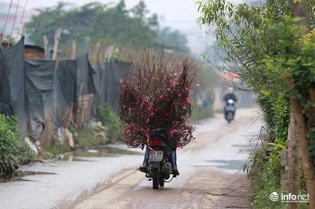 Thời tiết thuận lợi, đào Nhật Tân trổ bông to, đổ về phố phường Hà Nội - Ảnh 9.
