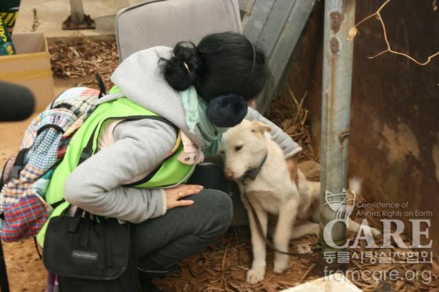 Cứu chó từ lò mổ nhưng lại giết chó để lấy tiền tài trợ, nhóm bảo vệ động vật nổi danh Hàn Quốc đang khiến dư luận phẫn nộ - Ảnh 1.