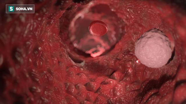 3 thứ có tác dụng ngăn tế bào ung thư phát triển: Bạn nên ăn nhiều hơn để phòng bệnh tốt - Ảnh 1.