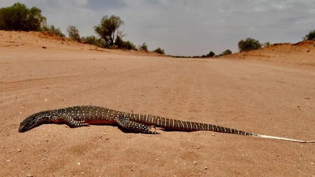 Cả thế giới đón mùa đông lạnh căm, riêng Úc chịu cảnh nắng nóng 50 độ, chảy cả nhựa đường - Ảnh 8.