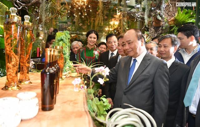 Thủ tướng kỳ vọng sâm Ngọc Linh sẽ làm nên dấu ấn lịch sử mới - Ảnh 3.