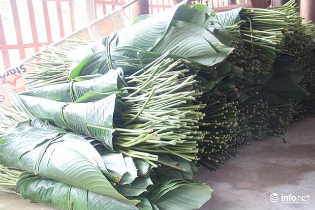 Trăm hộ dân hốt bạc triệu từ trồng lá dong phục vụ Tết - Ảnh 4.