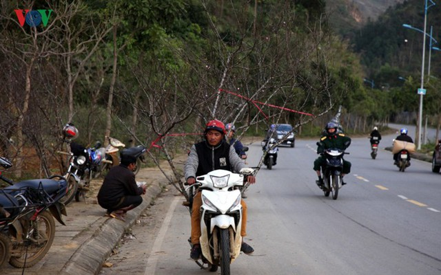 Ảnh: Đào rừng Tây Bắc ngập tràn trên phố núi Lai Châu - Ảnh 2.
