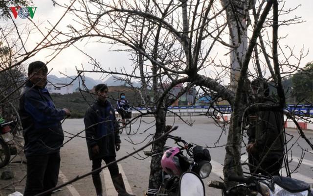 Ảnh: Đào rừng Tây Bắc ngập tràn trên phố núi Lai Châu - Ảnh 4.