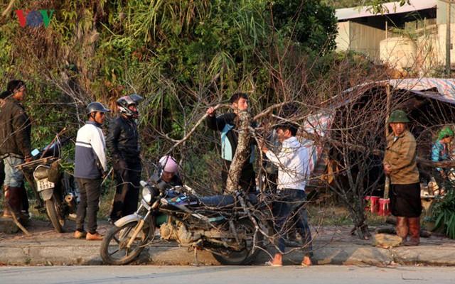Ảnh: Đào rừng Tây Bắc ngập tràn trên phố núi Lai Châu - Ảnh 6.