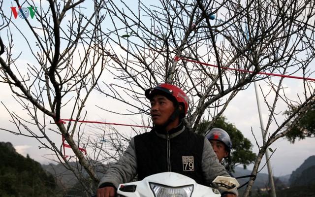 Ảnh: Đào rừng Tây Bắc ngập tràn trên phố núi Lai Châu - Ảnh 7.