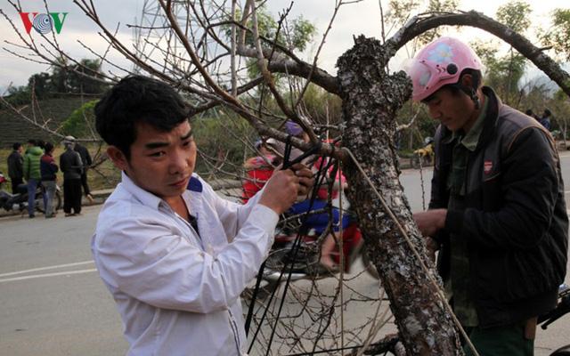 Ảnh: Đào rừng Tây Bắc ngập tràn trên phố núi Lai Châu - Ảnh 8.