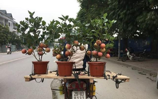 Khách hàng ngã ngửa khi táo bonsai nở hoa... râm bụt - Ảnh 1.