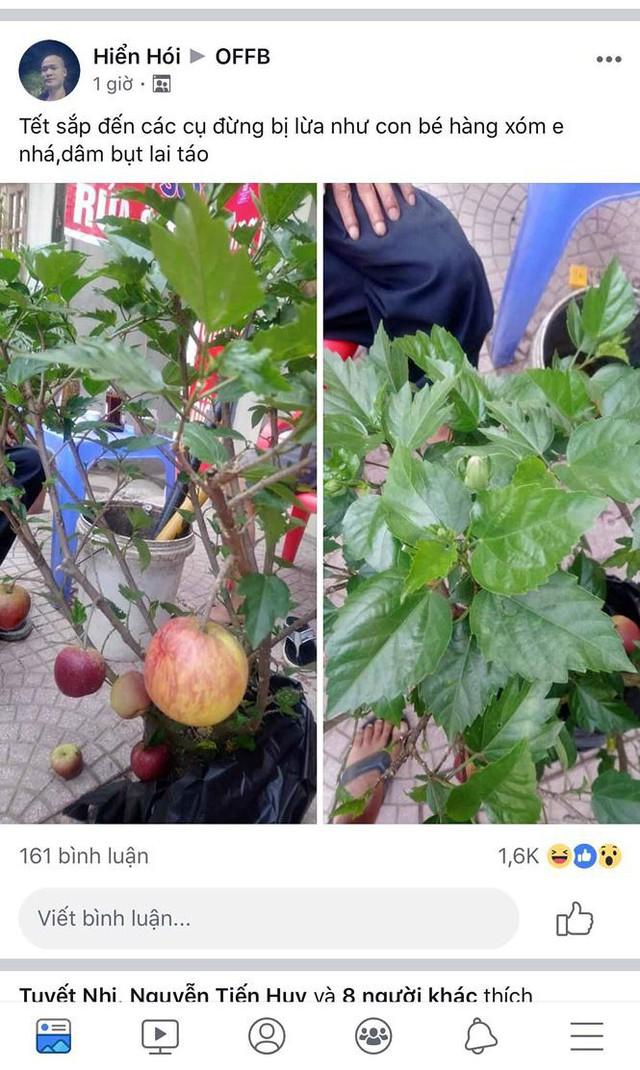 Khách hàng ngã ngửa khi táo bonsai nở hoa... râm bụt - Ảnh 4.