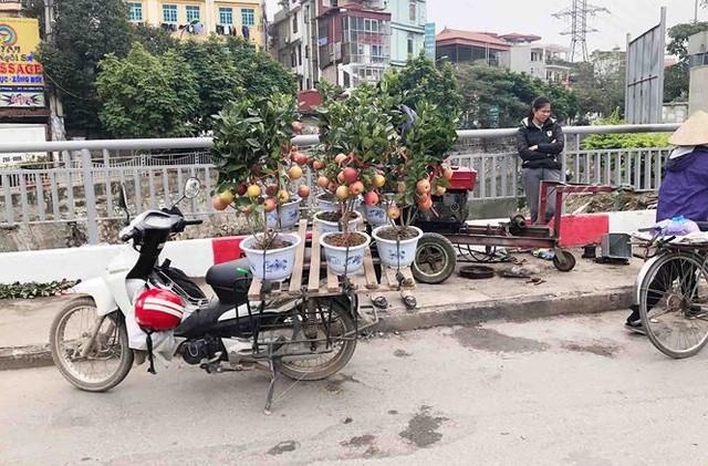 Khách hàng ngã ngửa khi táo bonsai nở hoa... râm bụt - Ảnh 5.