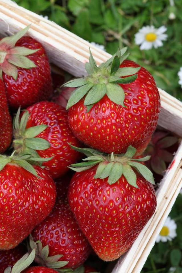 Mỹ: yêu ăn uống đến mức dành ra ngày lễ để vinh danh các món ăn - Ảnh 10.