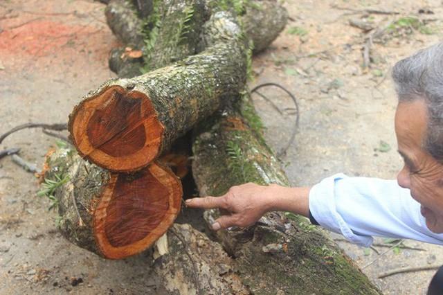 Đang chặt cây sưa trăm tỷ từng gây lùm xùm suốt 8 năm ở Hà Nội - Ảnh 7.
