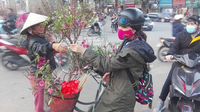 """Cành đào mini gây """"sốt"""" ở Hà Nội - Ảnh 2."""