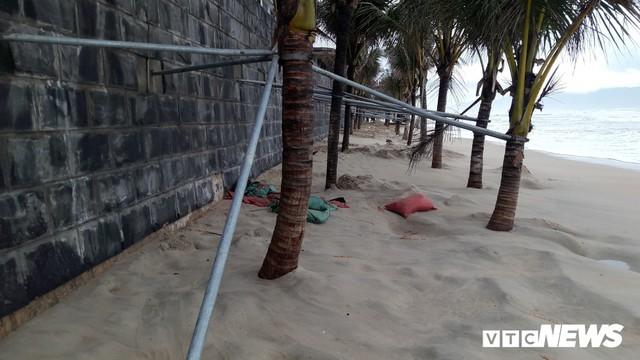 Ảnh: Mang sắt thép quây chằng chịt cả trăm cây dừa ven bãi biển hấp dẫn nhất hành tinh - Ảnh 2.