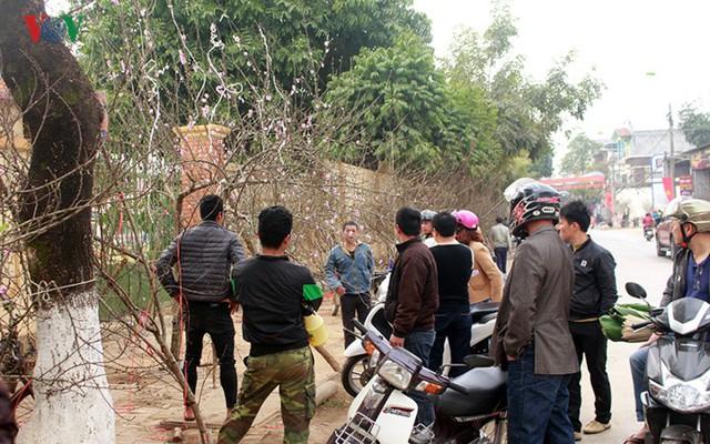 Nhộn nhịp bán mua đào rừng đón Tết ở Sơn La - Ảnh 11.