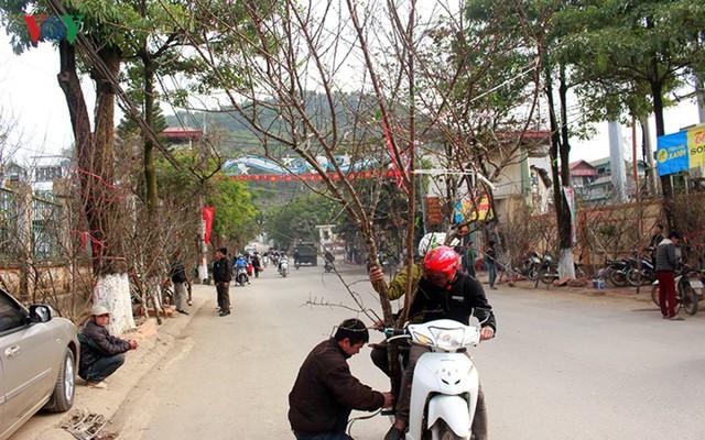 Nhộn nhịp bán mua đào rừng đón Tết ở Sơn La - Ảnh 5.