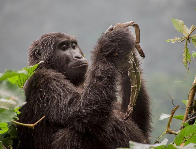 Thế giới tự nhiên kỳ diệu qua ống kính: Khoảnh khắc lạ thường tuyệt đẹp của cuộc sống hoang dã nổi bật nhất năm 2018 - Ảnh 8.