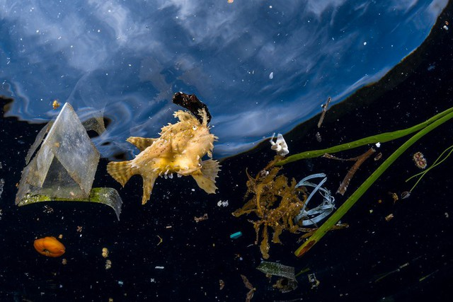 Thế giới tự nhiên kỳ diệu qua ống kính: Khoảnh khắc lạ thường tuyệt đẹp của cuộc sống hoang dã nổi bật nhất năm 2018 - Ảnh 3.