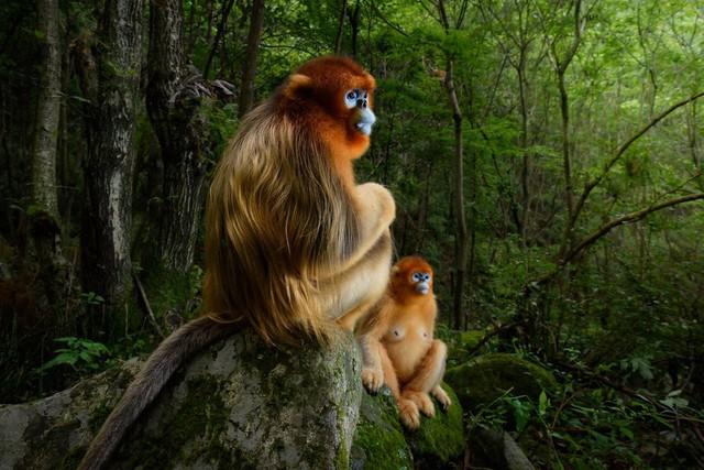 Thế giới tự nhiên kỳ diệu qua ống kính: Khoảnh khắc lạ thường tuyệt đẹp của cuộc sống hoang dã nổi bật nhất năm 2018 - Ảnh 1.