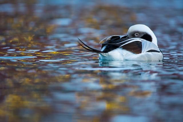 Thế giới tự nhiên kỳ diệu qua ống kính: Khoảnh khắc lạ thường tuyệt đẹp của cuộc sống hoang dã nổi bật nhất năm 2018 - Ảnh 13.