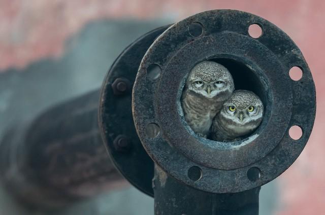 Thế giới tự nhiên kỳ diệu qua ống kính: Khoảnh khắc lạ thường tuyệt đẹp của cuộc sống hoang dã nổi bật nhất năm 2018 - Ảnh 11.