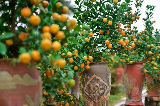 Độc đáo quất bonsai trồng trong bình gốm chơi Tết ở Hà Nội - Ảnh 11.