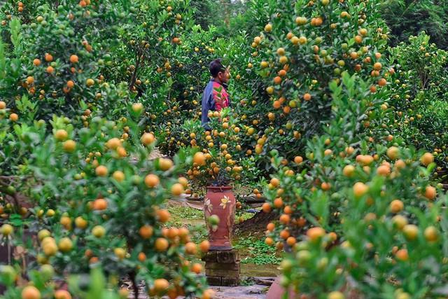 Độc đáo quất bonsai trồng trong bình gốm chơi Tết ở Hà Nội - Ảnh 12.