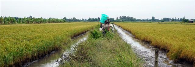 Bắt tôm càng mùa nước rút - Ảnh 5.