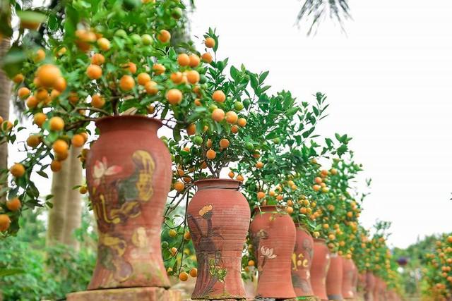 Độc đáo quất bonsai trồng trong bình gốm chơi Tết ở Hà Nội - Ảnh 5.