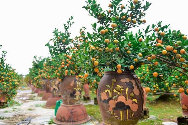 Độc đáo quất bonsai trồng trong bình gốm chơi Tết ở Hà Nội - Ảnh 10.