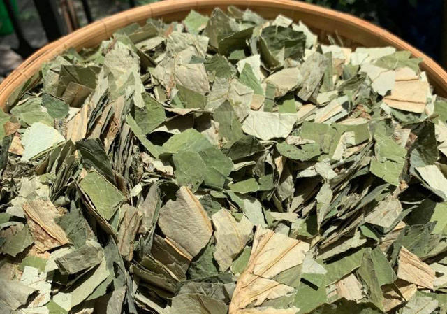 Loại lá mọc tràn ao bùn Việt Nam, 400 ngàn/kg, chị em ưa dùng để giữ eo - Ảnh 1.