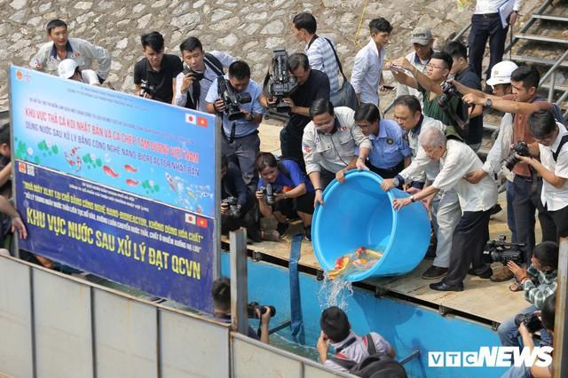 Gần 1 tháng sau khi thả, đàn cá Koi Nhật Bản trên sông Tô Lịch sống ra sao? - Ảnh 1.