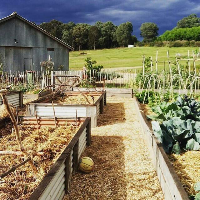 Gia đình 5 người quyết tâm không trở lại thành phố vì quá yêu thích cuộc sống nhà vườn ở nông thôn - Ảnh 11.