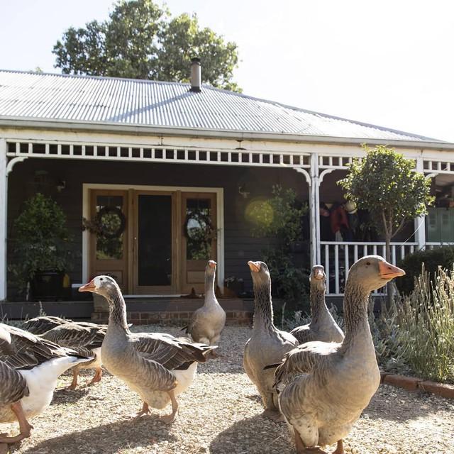 Gia đình 5 người quyết tâm không trở lại thành phố vì quá yêu thích cuộc sống nhà vườn ở nông thôn - Ảnh 14.