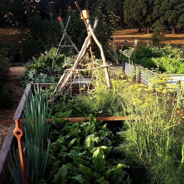 Gia đình 5 người quyết tâm không trở lại thành phố vì quá yêu thích cuộc sống nhà vườn ở nông thôn - Ảnh 20.