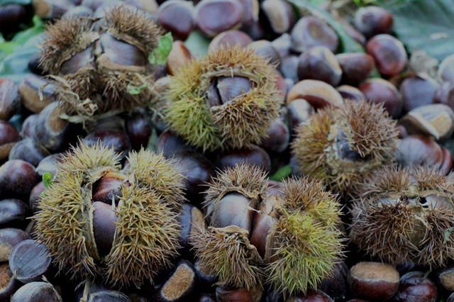 Trùng Khánh vào mùa hạt dẻ - Ảnh 1.