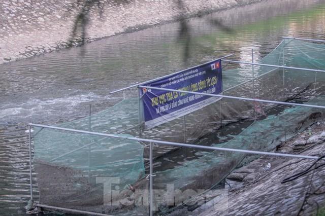 Xuất hiện nhiều cá chết ngoài khu thí điểm thả cá Koi ở Hồ Tây, sông Tô Lịch - Ảnh 11.