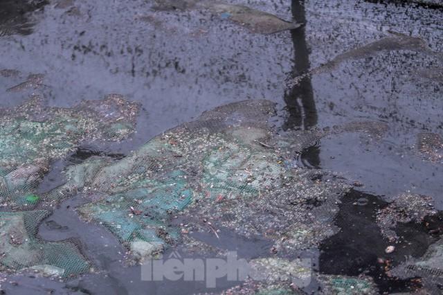 Xuất hiện nhiều cá chết ngoài khu thí điểm thả cá Koi ở Hồ Tây, sông Tô Lịch - Ảnh 12.