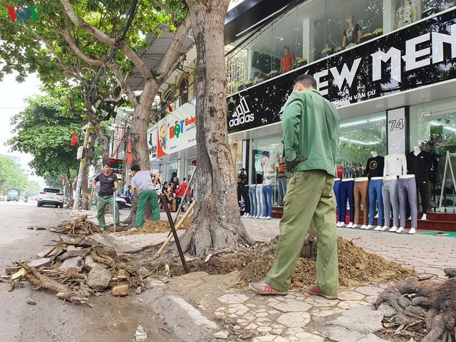 Ảnh: Dân tiếc nuối nhìn hàng cây cổ thụ hàng chục năm tuổi bị di dời - Ảnh 8.