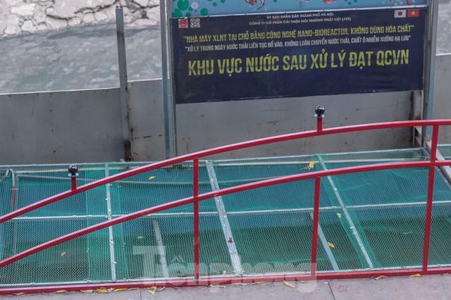 Xuất hiện nhiều cá chết ngoài khu thí điểm thả cá Koi ở Hồ Tây, sông Tô Lịch - Ảnh 10.
