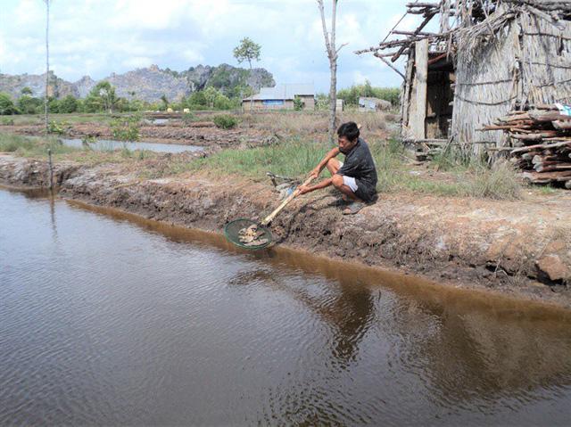 Kiên Giang: Cá biển và cá nuôi lồng bè chết hàng loạt - Ảnh 1.