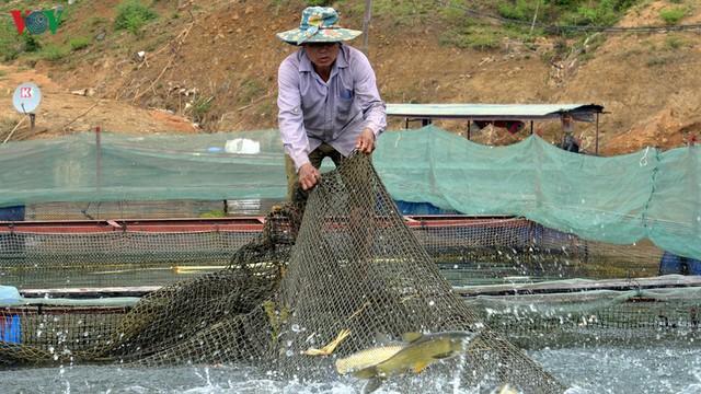 Nuôi cá lồng trên lòng hồ thủy điện Sơn La cho thu nhập tiền tỷ - Ảnh 1.