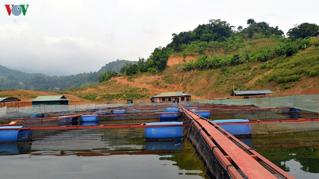 Nuôi cá lồng trên lòng hồ thủy điện Sơn La cho thu nhập tiền tỷ - Ảnh 2.