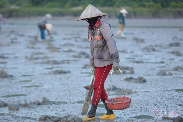 Đội nắng vác mai đi đào vàng biển, mỗi ngày thu tiền triệu - Ảnh 1.