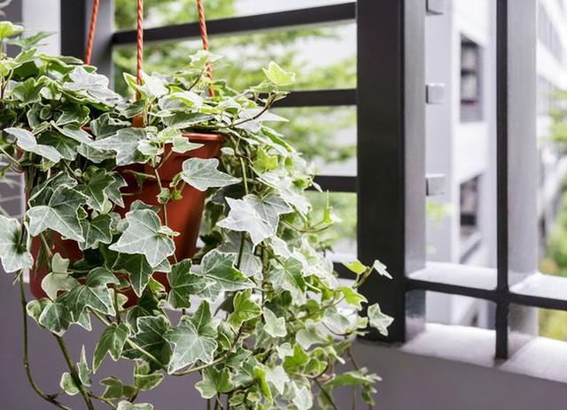 Gợi ý 8 loại cây cảnh thanh lọc không khí tốt, thích hợp để làm giảm ô nhiễm trong nhà - Ảnh 2.