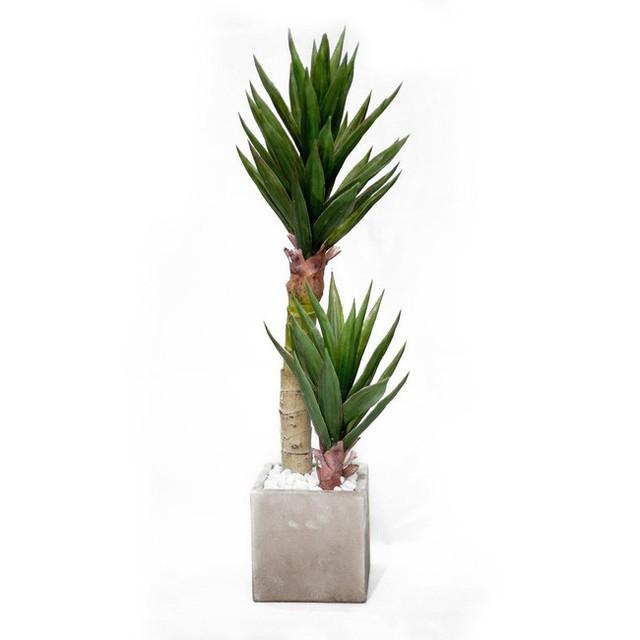 Gợi ý 8 loại cây cảnh thanh lọc không khí tốt, thích hợp để làm giảm ô nhiễm trong nhà - Ảnh 6.