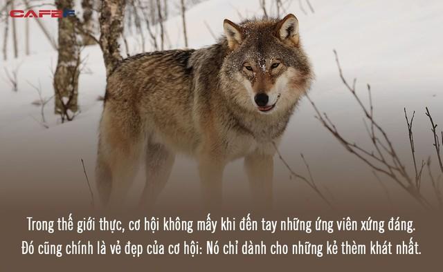 10 chân lý càng ngẫm càng thấm giúp Sói già phố Wall thành công: Học làm sói nếu sống giữa bầy chó; muốn giàu có, vứt hết nguyên tắc đi! - Ảnh 5.