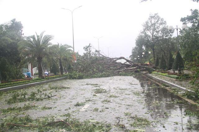 Sau bão số 5, cây cối đổ ngổn ngang, bãi biển Quy Nhơn ngập ngụa rác - Ảnh 3.